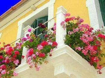 如果阳台朝南,光照时间长,可以养些喜欢阳光的花草,如米兰,茉莉,扶桑图片
